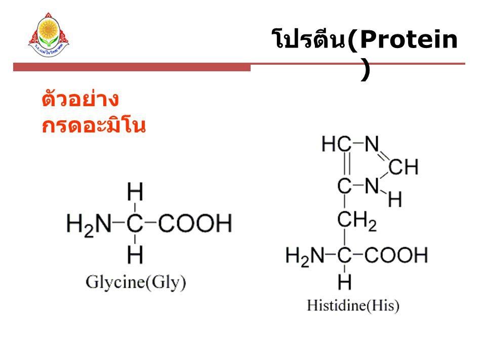ตัวอย่างโปรตีนเส้นใย Casein Enzyme Albumin