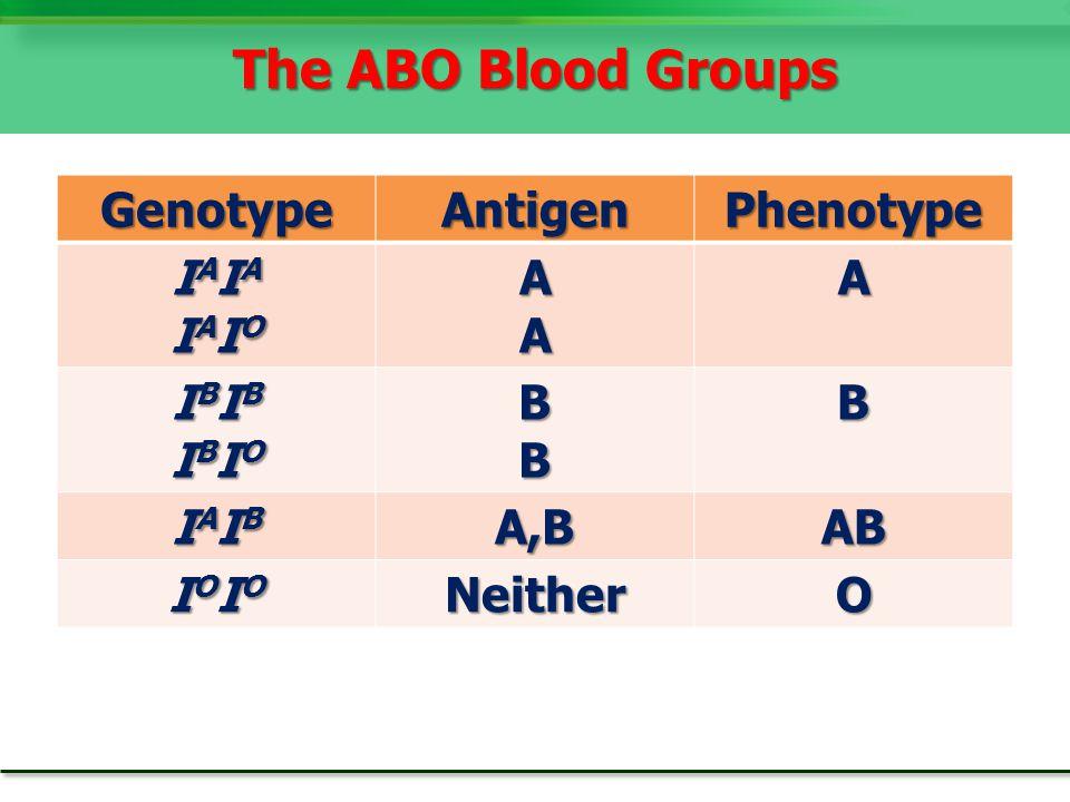 GenotypeAntigenPhenotype IAIAIAIAIAIOIAIOIAIAIAIAIAIOIAIOAAA IBIBIBIBIBIOIBIOIBIBIBIBIBIOIBIOBBB IAIBIAIBIAIBIAIBA,BAB IOIOIOIOIOIOIOIONeitherO The ABO Blood Groups