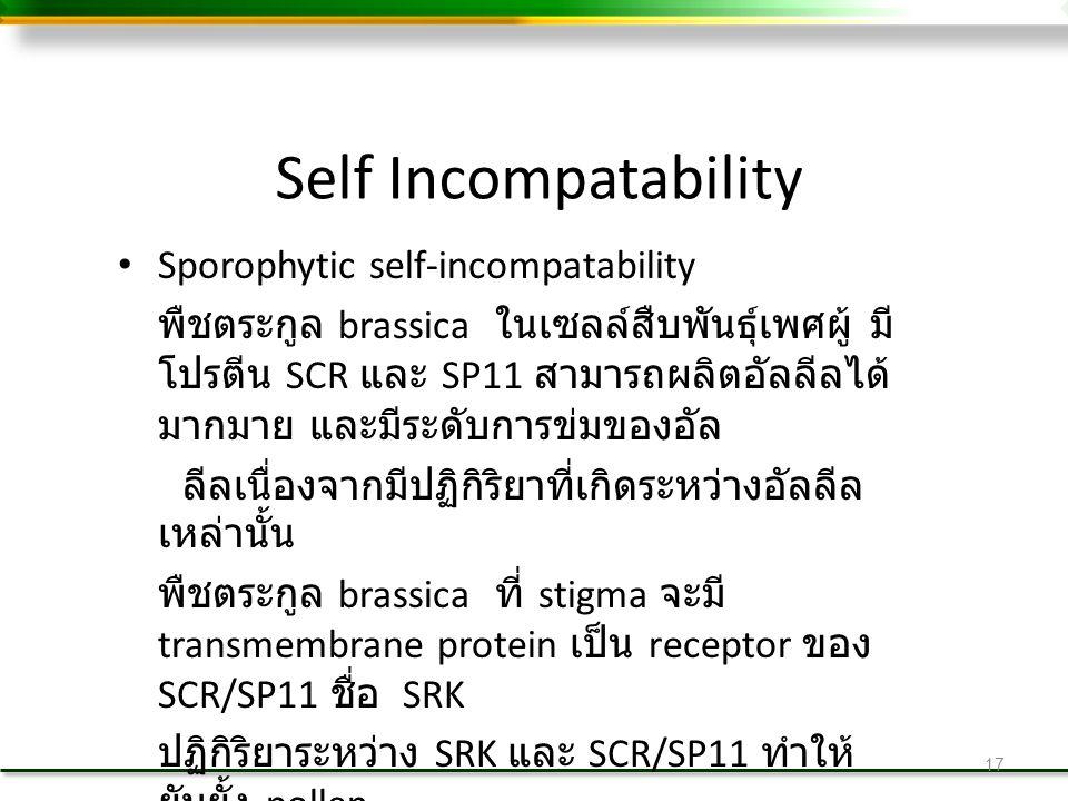 Self Incompatability Sporophytic self-incompatability พืชตระกูล brassica ในเซลล์สืบพันธุ์เพศผู้ มี โปรตีน SCR และ SP11 สามารถผลิตอัลลีลได้ มากมาย และมีระดับการข่มของอัล ลีลเนื่องจากมีปฏิกิริยาที่เกิดระหว่างอัลลีล เหล่านั้น พืชตระกูล brassica ที่ stigma จะมี transmembrane protein เป็น receptor ของ SCR/SP11 ชื่อ SRK ปฏิกิริยาระหว่าง SRK และ SCR/SP11 ทำให้ ยับยั้ง pollen 17