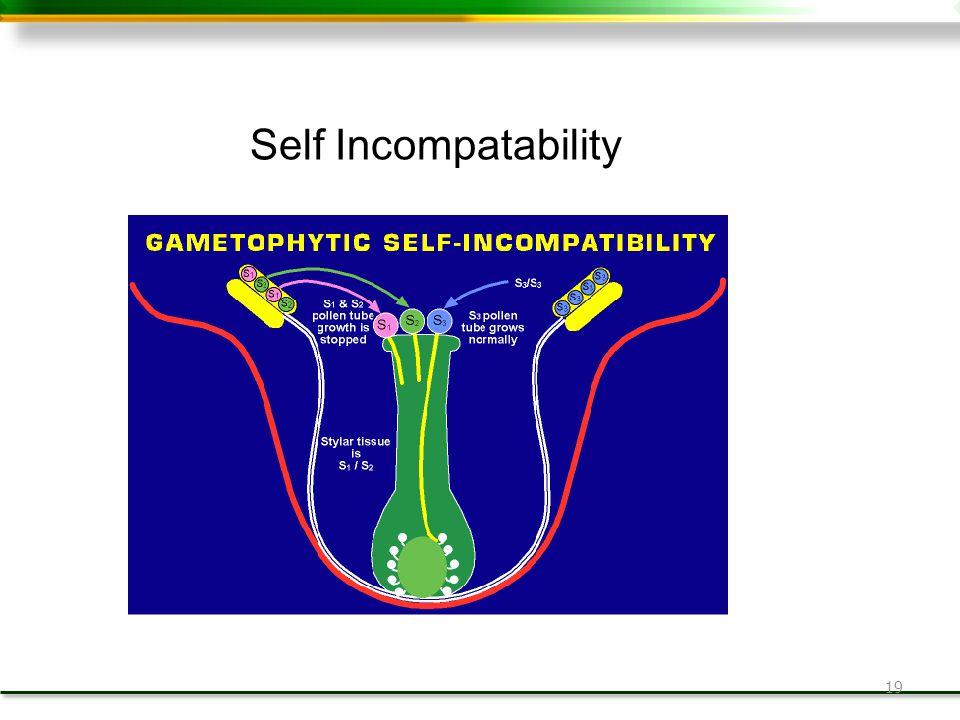 19 Self Incompatability
