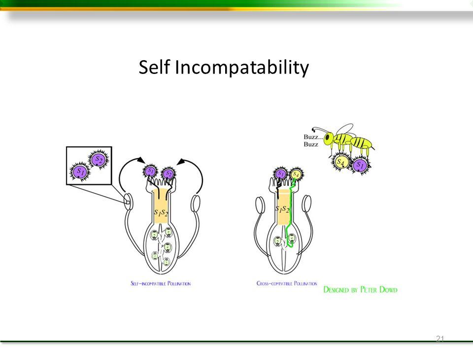 21 Self Incompatability