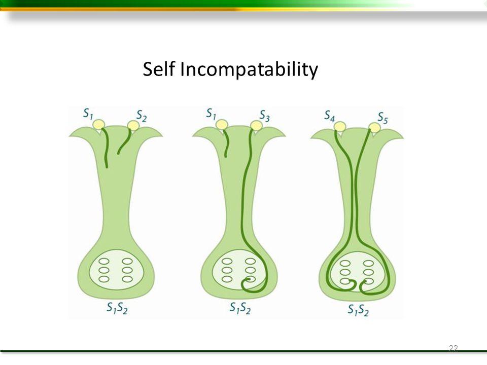 22 Self Incompatability