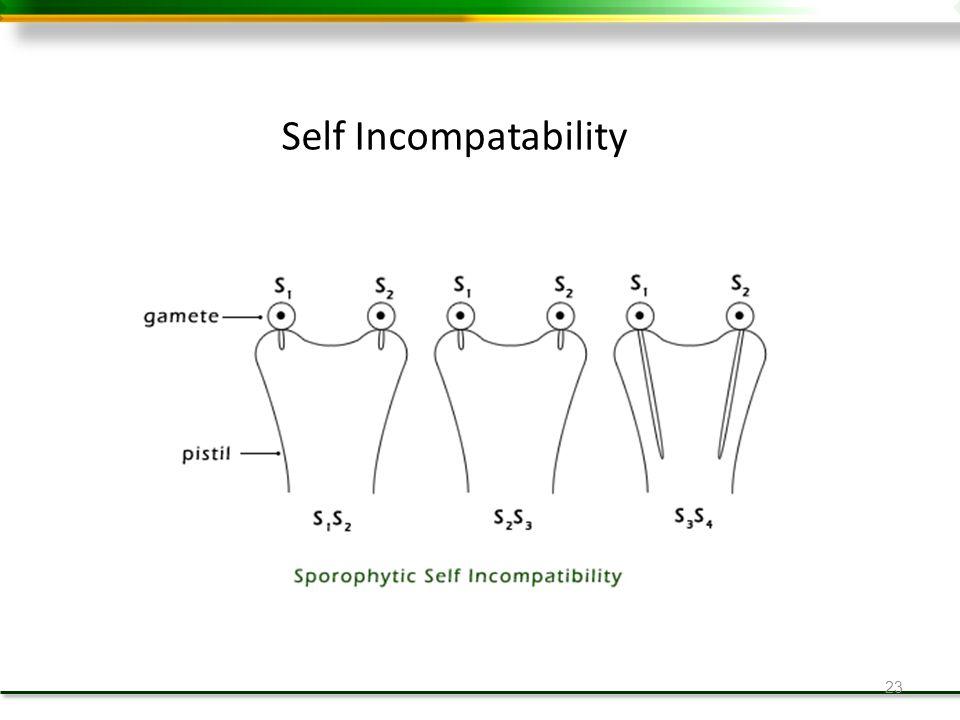 23 Self Incompatability