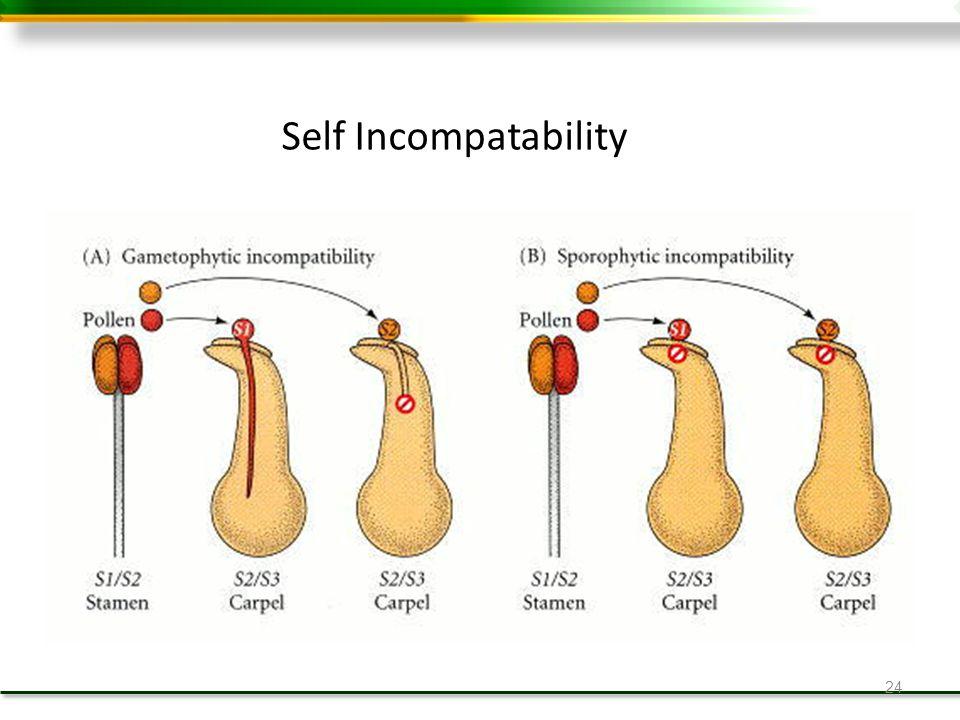 24 Self Incompatability