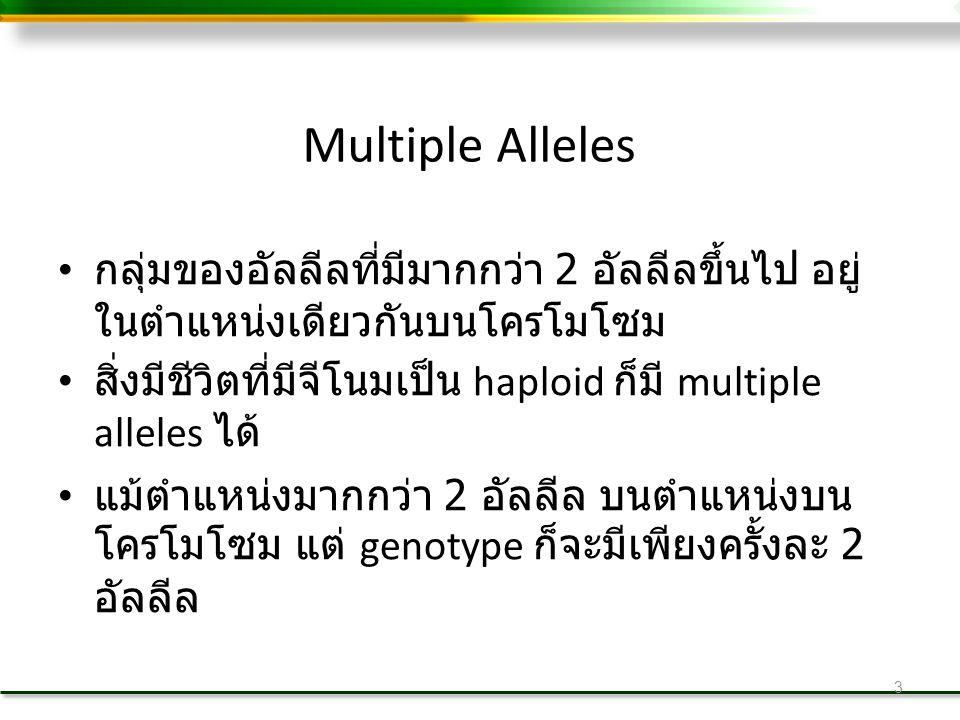 3 Multiple Alleles กลุ่มของอัลลีลที่มีมากกว่า 2 อัลลีลขึ้นไป อยู่ ในตำแหน่งเดียวกันบนโครโมโซม สิ่งมีชีวิตที่มีจีโนมเป็น haploid ก็มี multiple alleles ได้ แม้ตำแหน่งมากกว่า 2 อัลลีล บนตำแหน่งบน โครโมโซม แต่ genotype ก็จะมีเพียงครั้งละ 2 อัลลีล
