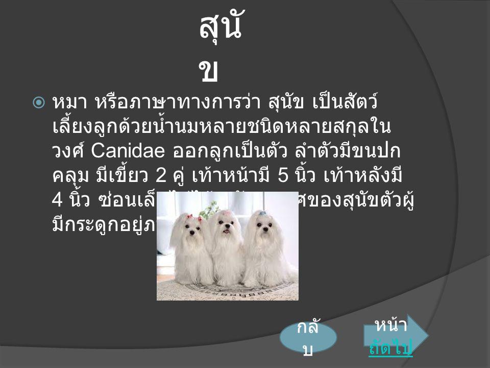 สุนั ข  หมา หรือภาษาทางการว่า สุนัข เป็นสัตว์ เลี้ยงลูกด้วยน้ำนมหลายชนิดหลายสกุลใน วงศ์ Canidae ออกลูกเป็นตัว ลำตัวมีขนปก คลุม มีเขี้ยว 2 คู่ เท้าหน้ามี 5 นิ้ว เท้าหลังมี 4 นิ้ว ซ่อนเล็บไม่ได้ อวัยวะเพศของสุนัขตัวผู้ มีกระดูกอยู่ภายใน 1 ชิ้น หน้า ถัดไป ถัดไป กลั บ