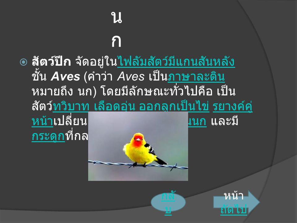 นกนก  สัตว์ปีก จัดอยู่ในไฟลัมสัตว์มีแกนสันหลัง ชั้น Aves ( คำว่า Aves เป็นภาษาละติน หมายถึง นก ) โดยมีลักษณะทั่วไปคือ เป็น สัตว์ทวิบาท เลือดอุ่น ออกลูกเป็นไข่ รยางค์คู่ หน้าเปลี่ยนแปลงไปเป็นปีก มีขนนก และมี กระดูกที่กลวงเบาไฟลัมสัตว์มีแกนสันหลังภาษาละตินทวิบาท เลือดอุ่น ออกลูกเป็นไข่ รยางค์คู่ หน้าปีกขนนก กระดูก หน้า ถัดไป ถัดไป กลั บ