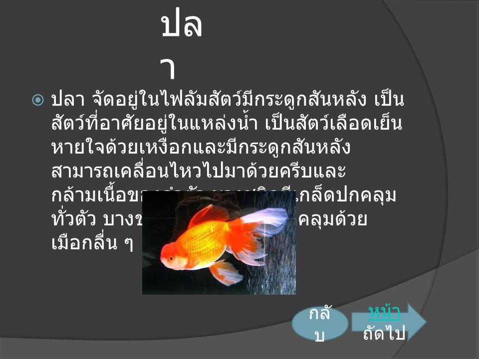ปล า  ปลา จัดอยู่ในไฟลัมสัตว์มีกระดูกสันหลัง เป็น สัตว์ที่อาศัยอยู่ในแหล่งน้ำ เป็นสัตว์เลือดเย็น หายใจด้วยเหงือกและมีกระดูกสันหลัง สามารถเคลื่อนไหวไปมาด้วยครีบและ กล้ามเนื้อของลำตัว บางชนิดมีเกล็ดปกคลุม ทั่วตัว บางชนิดไม่มีเกล็ดแต่ปกคลุมด้วย เมือกลื่น ๆ หน้า หน้า ถัดไป กลั บ