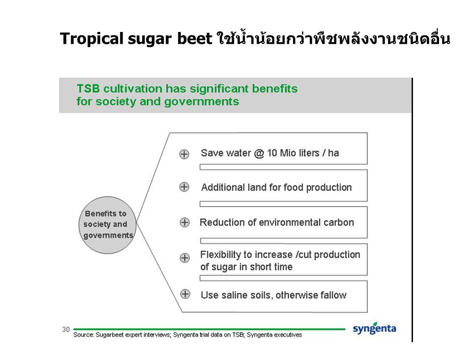 Tropical sugar beet ใช้น้ำน้อยกว่าพืชพลังงานชนิดอื่น