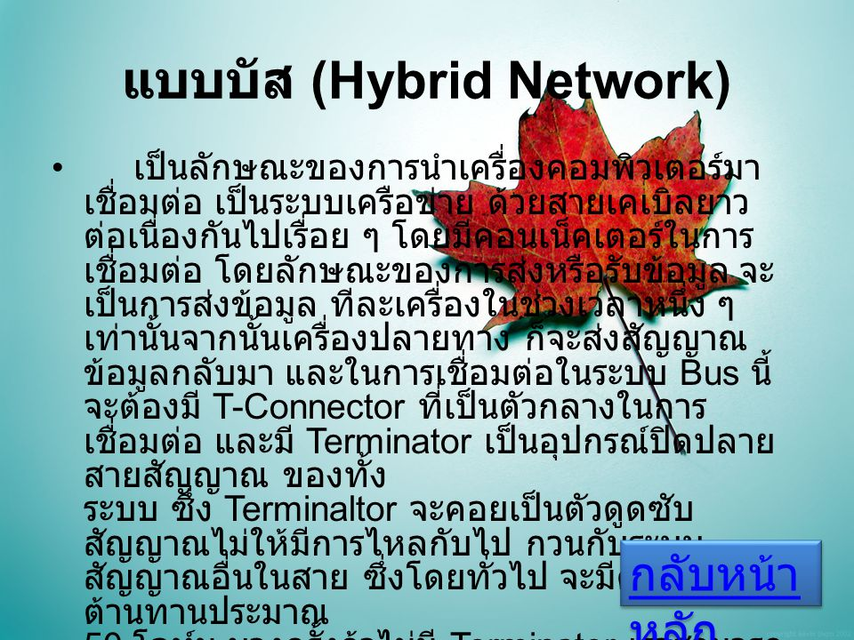 แบบบัส (Hybrid Network) เป็นลักษณะของการนำเครื่องคอมพิวเตอร์มา เชื่อมต่อ เป็นระบบเครือข่าย ด้วยสายเคเบิลยาว ต่อเนื่องกันไปเรื่อย ๆ โดยมีคอนเน็คเตอร์ในการ เชื่อมต่อ โดยลักษณะของการส่งหรือรับข้อมูล จะ เป็นการส่งข้อมูล ทีละเครื่องในช่วงเวลาหนึ่ง ๆ เท่านั้นจากนั้นเครื่องปลายทาง ก็จะส่งสัญญาณ ข้อมูลกลับมา และในการเชื่อมต่อในระบบ Bus นี้ จะต้องมี T-Connector ที่เป็นตัวกลางในการ เชื่อมต่อ และมี Terminator เป็นอุปกรณ์ปิดปลาย สายสัญญาณ ของทั้ง ระบบ ซึ่ง Terminaltor จะคอยเป็นตัวดูดซับ สัญญาณไม่ให้มีการไหลกับไป กวนกับระบบ สัญญาณอื่นในสาย ซึ่งโดยทั่วไป จะมีค่าความ ต้านทานประมาณ 50 โอห์ม บางครั้งถ้าไม่มี Terminator เราสามารถ ให้ตัว R ทั่วไปที่ใช้ในอุปกรณ์อิเล็คทรอนิคส์ขนาด 50 โอห์มแทนได้เหมือนกัน กลับหน้า หลัก กลับหน้า หลัก