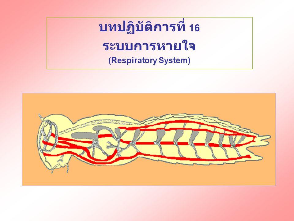 บทปฏิบัติการที่ 16 ระบบการหายใจ (Respiratory System)