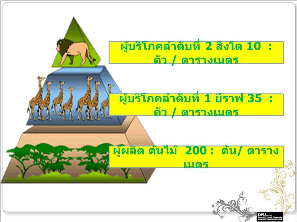 ผู้ผลิต ต้นไม้ 200 : ต้น / ตาราง เมตร ผู้บริโภคลำดับที่ 1 ยีราฟ 35 : ตัว / ตารางเมตร ผู้บริโภคลำดับที่ 2 สิงโต 10 : ตัว / ตารางเมตร
