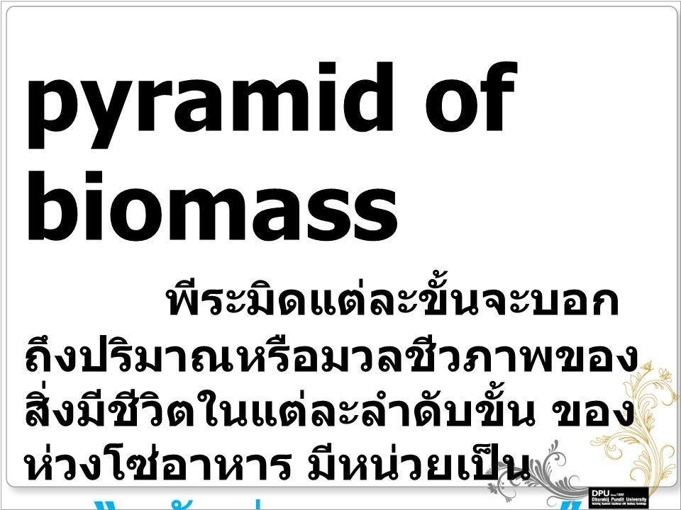 pyramid of biomass พีระมิดแต่ละขั้นจะบอก ถึงปริมาณหรือมวลชีวภาพของ สิ่งมีชีวิตในแต่ละลำดับขั้น ของ ห่วงโซ่อาหาร มีหน่วยเป็น กรัมต่อตารางเมตร
