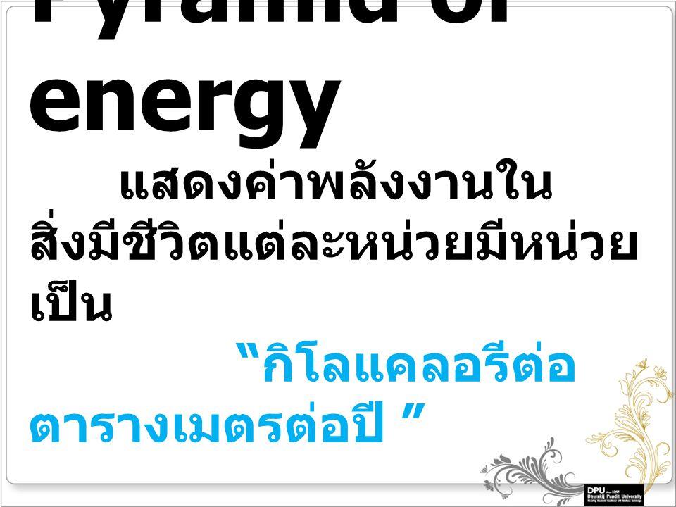 Pyramid of energy แสดงค่าพลังงานใน สิ่งมีชีวิตแต่ละหน่วยมีหน่วย เป็น กิโลแคลอรีต่อ ตารางเมตรต่อปี