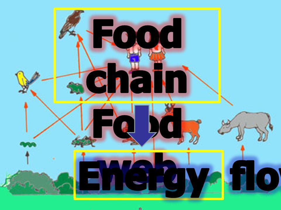 ความสัมพันธ์ของ สิ่งมีชีวิตชนิดต่าง ๆ ในระบบ นิเวศที่มีการกินต่อกันเป็นทอด ๆ และมักเริ่มต้นด้วย ผู้ผลิต
