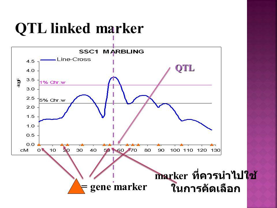 QTL linked marker = gene marker QTL marker ที่ควรนำไปใช้ ในการคัดเลือก