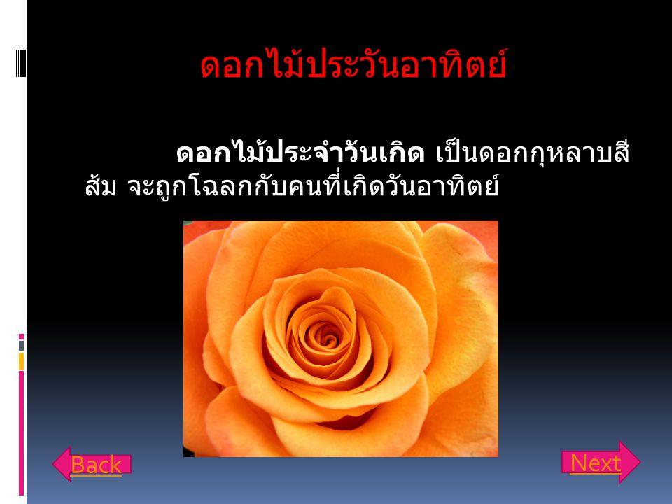 ดอกไม้ประวันอาทิตย์ ดอกไม้ประจำวันเกิด เป็นดอกกุหลาบสี ส้ม จะถูกโฉลกกับคนที่เกิดวันอาทิตย์ Back Next