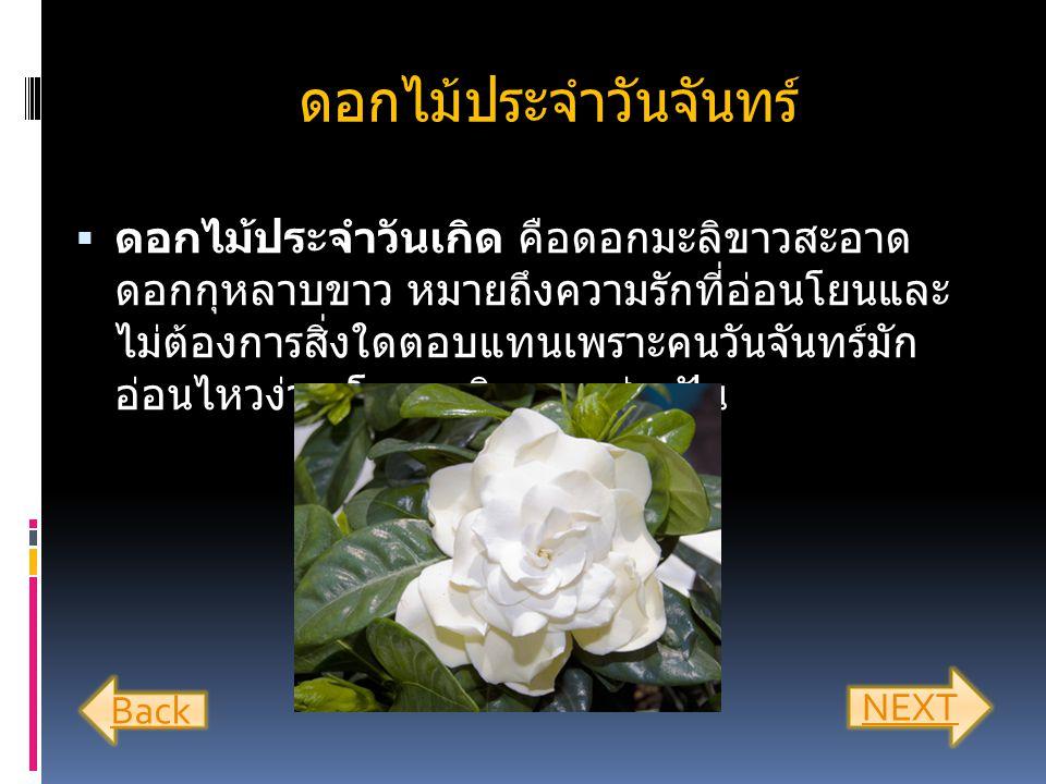 ดอกไม้ประจำวันจันทร์  ดอกไม้ประจำวันเกิด คือดอกมะลิขาวสะอาด ดอกกุหลาบขาว หมายถึงความรักที่อ่อนโยนและ ไม่ต้องการสิ่งใดตอบแทนเพราะคนวันจันทร์มัก อ่อนไหวง่าย โรแมนติก และช่างฝัน Back NEXT