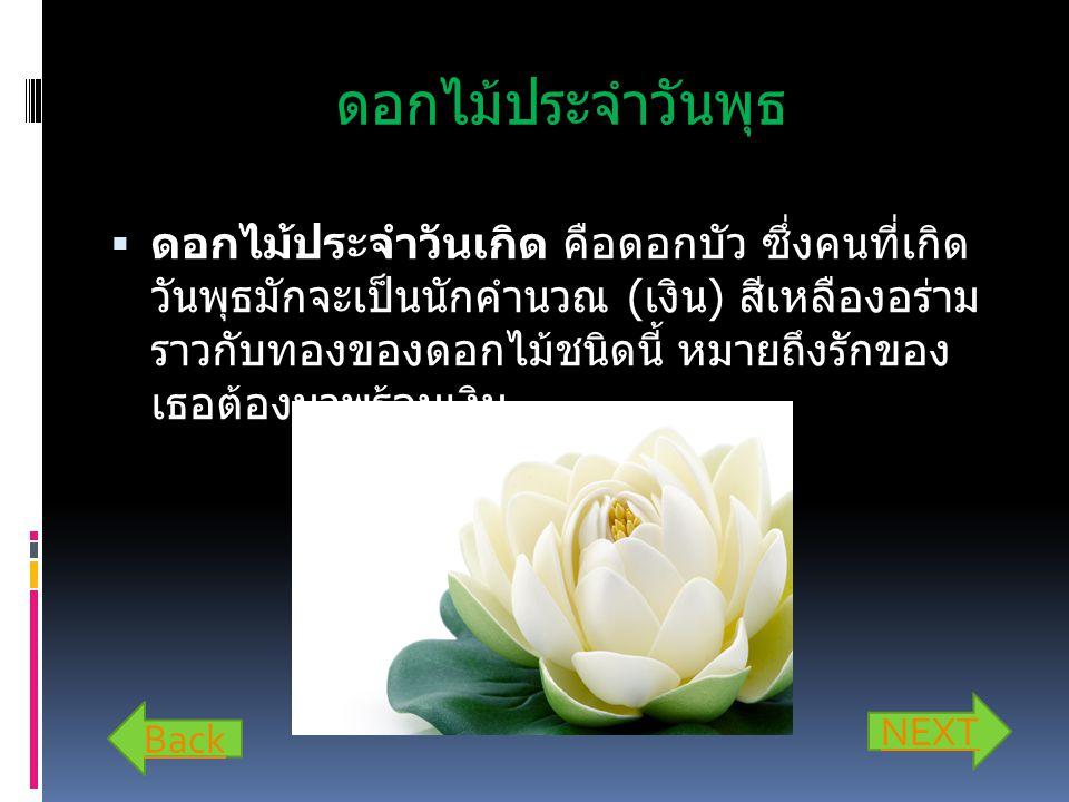ดอกไม้ประจำวันพุธ  ดอกไม้ประจำวันเกิด คือดอกบัว ซึ่งคนที่เกิด วันพุธมักจะเป็นนักคำนวณ ( เงิน ) สีเหลืองอร่าม ราวกับทองของดอกไม้ชนิดนี้ หมายถึงรักของ เธอต้องมาพร้อมเงิน Back NEXT