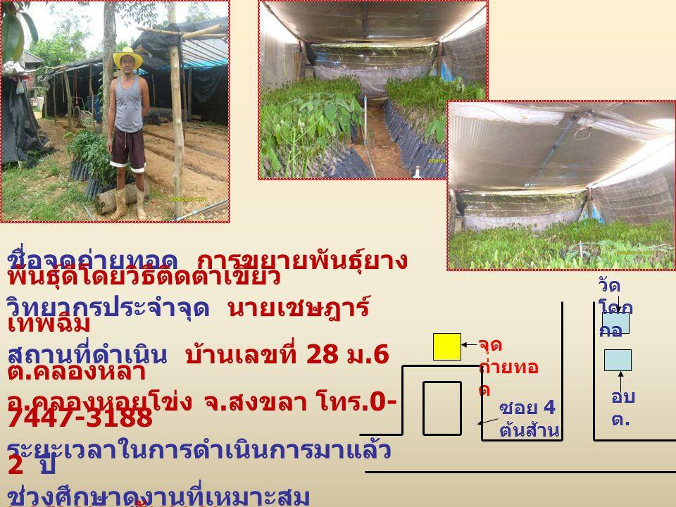 ชื่อจุดถ่ายทอด การขยายพันธุ์ยาง พันธุ์ดีโดยวิธีติดตาเขียว วิทยากรประจำจุด นายเชษฎาร์ เทพฉิม สถานที่ดำเนิน บ้านเลขที่ 28 ม.6 ต.