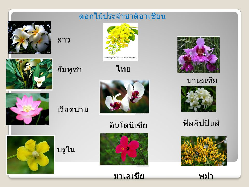 ดอกไม้ประจำชาติอาเชียน ไทย ลาว กัมพูชา เวียดนาม บรูไน มาเลเซีย อินโดนีเซีย มาเลเซีย ฟิลลิปปินส์ พม่า