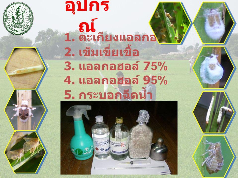 1. ตะเกียงแอลกอฮอล์ 2. เข็มเขี่ยเชื้อ 3. แอลกอฮอล์ 75% 4. แอลกอฮอล์ 95% 5. กระบอกฉีดน้ำ อุปกร ณ์