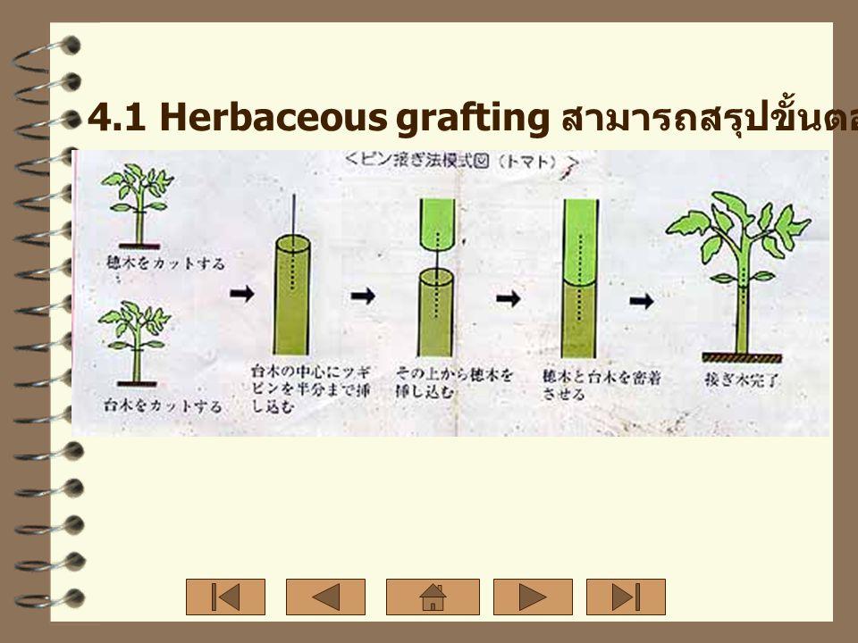 7. รอยต่อระหว่างกิ่งพันธุ์ดีและต้นตอ