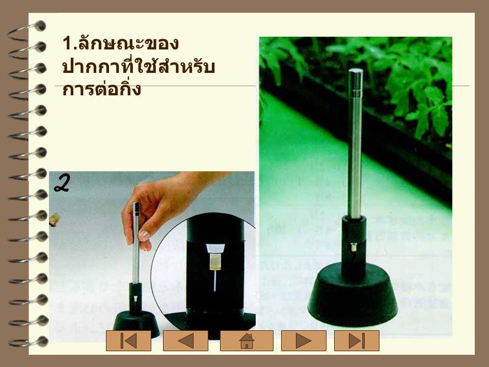 2. ใช้มีดที่คมและสะอาดตัดลำต้น ทั้งต้นตอและกิ่งพันธุ์ดี