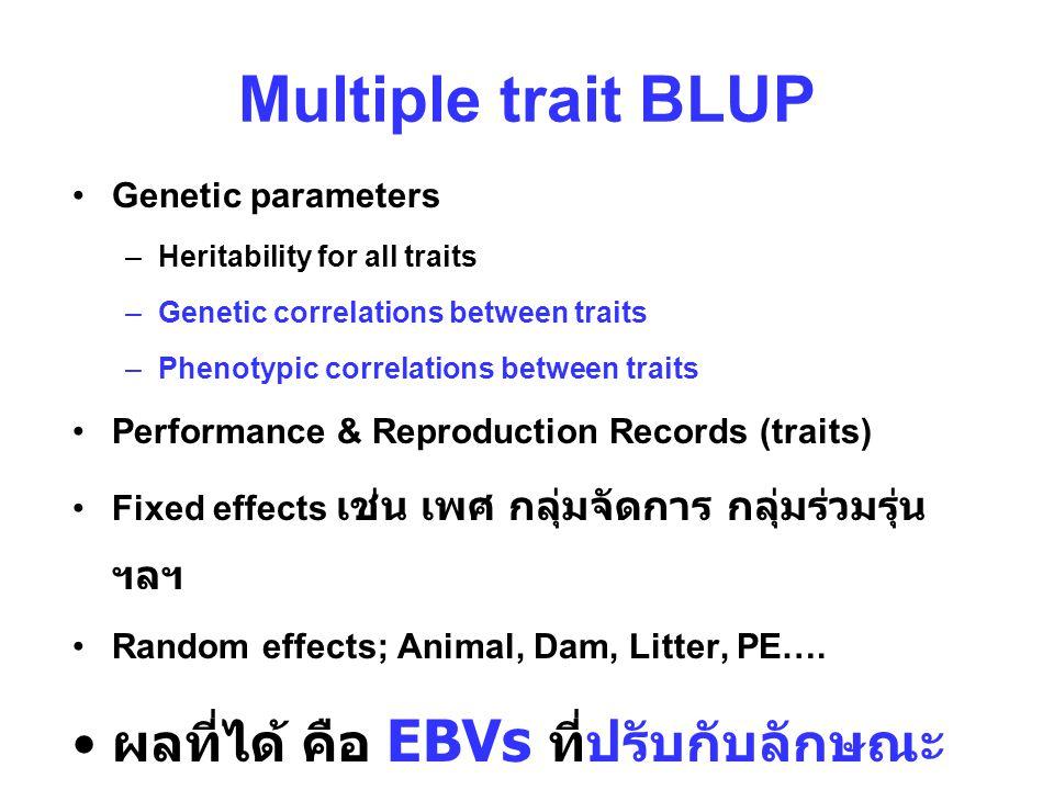 Multiple trait BLUP Genetic parameters –Heritability for all traits –Genetic correlations between traits –Phenotypic correlations between traits Performance & Reproduction Records (traits) Fixed effects เช่น เพศ กลุ่มจัดการ กลุ่มร่วมรุ่น ฯลฯ Random effects; Animal, Dam, Litter, PE….