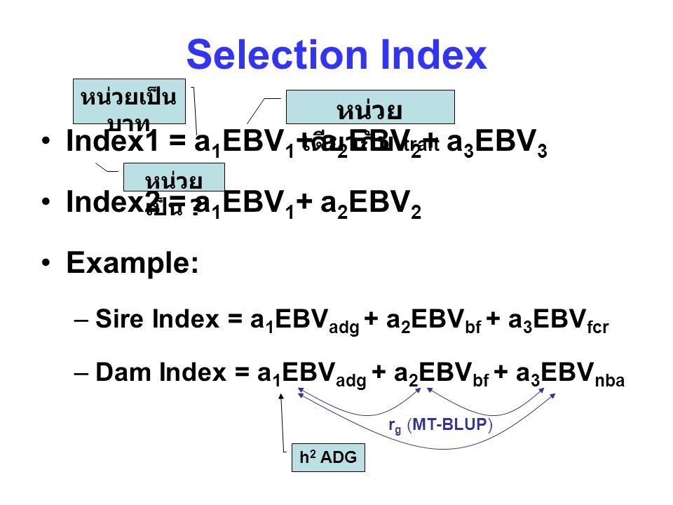 Selection Index Index1 = a 1 EBV 1 + a 2 EBV 2 + a 3 EBV 3 Index2 = a 1 EBV 1 + a 2 EBV 2 Example: –Sire Index = a 1 EBV adg + a 2 EBV bf + a 3 EBV fcr –Dam Index = a 1 EBV adg + a 2 EBV bf + a 3 EBV nba h 2 ADG r g (MT-BLUP) หน่วย เดียวกับ trait หน่วยเป็น บาท หน่วย เป็น ?
