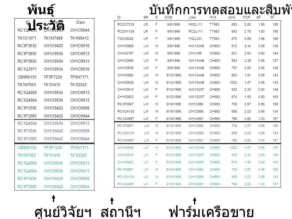 IDSireDam RC1Q4435CH1O9934CH1O9944 TK1O1971TK1M7488TK1N9413 RC3P3632CH1O9420CH1O9910 RC1P3850CH1O9934CH1O9913 RC1P3856CH1O9934CH1O9913 RC1Q3971CH1O9934CH1O9910 CB0R0155TP3P7229TP0N7171 TK1N7953TK1I1415TK1I2520 RC1Q4666CH1O9934CH1O9913 RC1Q4664CH1O9934CH1O9913 RC1P3556CH1O9420CH1O9908 RC1P3585CH1O9420CH1O9944 IDBRSDOBLitterHYSADGFCRBF Age 90 RC2O7219LRF9/5/1995MK2L111TT9536832.801.65189 RC2M1109LRF9/9/1995RC2L111TT9536832.761.60185 TK2O5282LRF9/9/1995TK2L231TT9538702.691.95159 CH1K3568LWM9/9/1995NW1G448CH9539122.440.85135 CH1K3797LWM9/9/1995CH1I199CH9538312.640.80144 CH1K3569LWF9/9/1995NW1G448CH9538842.350.85137 CH1K3539LWF9/9/1995NW1G449CH9537972.630.85148 CH1K3562LWM9/12/1995NW1G448CH9539831.910.85134 CH1K3536LWM9/12/1995NW1G449CH95310001.870.85133 CH1K3618LWF9/12/1995NW1G207CH9538332.330.90149 CH1K3623LWF9/12/1995NW1G207CH9536741.830.80163 RC1P3557LWM9/18/1995CH1O990CH9537092.570.95159 RC1Q4133LWM9/18/1995CH1O995CH9538852.030.85134 RC1Q4657LWF9/18/1995CH1O991CH9537562.621.00157 พันธุ์ ประวัติ บันทึกการทดสอบและสืบพันธุ์ RC1Q4664CH1O9934CH1O9913 RC1P3556CH1O9420CH1O9908 RC1P3585CH1O9420CH1O9944 RC1P3557LWM9/18/1995CH1O990CH9537092.570.95159 RC1Q4133LWM9/18/1995CH1O995CH9538852.030.85134 RC1Q4657LWF9/18/1995CH1O991CH9537562.621.00157 CB0R0155TP3P7229TP0N7171 TK1N7953TK1I1415TK1I2520 RC1Q4666CH1O9934CH1O9913 RC1Q4664CH1O9934CH1O9913 RC1P3556CH1O9420CH1O9908 RC1P3585CH1O9420CH1O9944 CH1K3536LWM9/12/1995NW1G449CH95310001.870.85133 CH1K3618LWF9/12/1995NW1G207CH9538332.330.90149 CH1K3623LWF9/12/1995NW1G207CH9536741.830.80163 RC1P3557LWM9/18/1995CH1O990CH9537092.570.95159 RC1Q4133LWM9/18/1995CH1O995CH9538852.030.85134 RC1Q4657LWF9/18/1995CH1O991CH9537562.621.00157 ศูนย์วิจัยฯสถานีฯฟาร์มเครือขาย