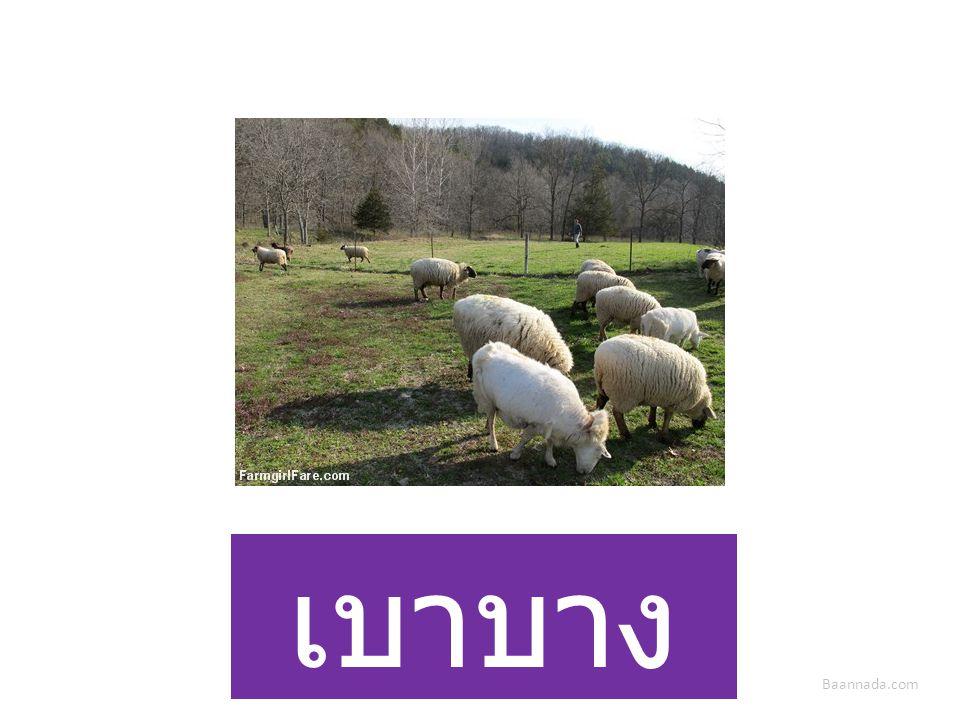 Baannada.com เบาบาง