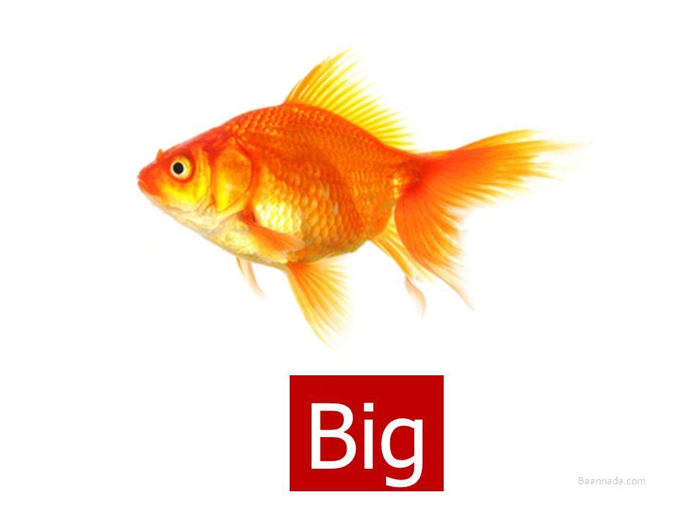 Baannada.com Big