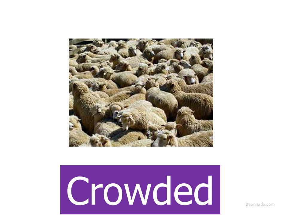 Baannada.com Crowded