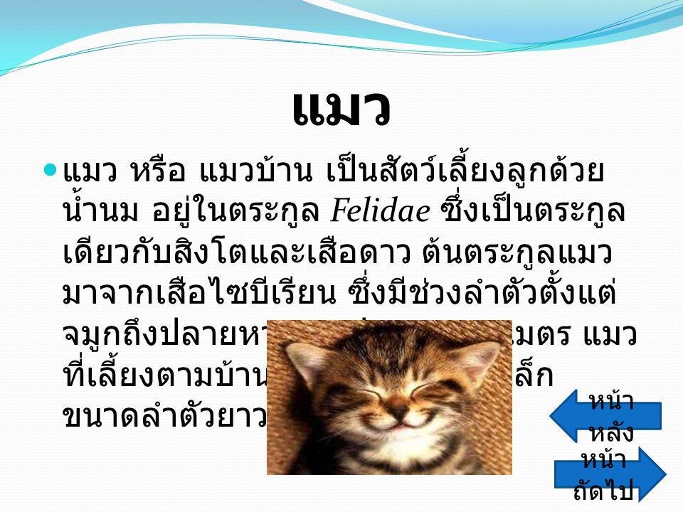 แมว แมว หรือ แมวบ้าน เป็นสัตว์เลี้ยงลูกด้วย น้ำนม อยู่ในตระกูล Felidae ซึ่งเป็นตระกูล เดียวกับสิงโตและเสือดาว ต้นตระกูลแมว มาจากเสือไซบีเรียน ซึ่งมีช่