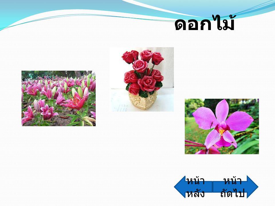ดอกไม้ หน้า ถัดไป หน้า หลัง