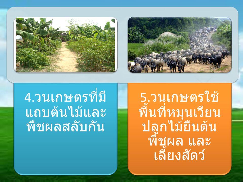 4. วนเกษตรที่มี แถบต้นไม้และ พืชผลสลับกัน 5. วนเกษตรใช้ พื้นที่หมุนเวียน ปลูกไม้ยืนต้น พืชผล และ เลี้ยงสัตว์