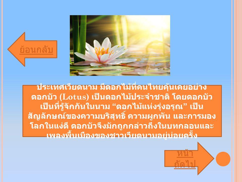 ย้อนกลับ หน้า ถัดไป ประเทศเวียดนาม มีดอกไม้ที่คนไทยคุ้นเคยอย่าง ดอกบัว (Lotus) เป็นดอกไม้ประจำชาติ โดยดอกบัว เป็นที่รู้จักกันในนาม ดอกไม้แห่งรุ่งอรุณ เป็น สัญลักษณ์ของความบริสุทธิ์ ความผูกพัน และการมอง โลกในแง่ดี ดอกบัวจึงมักถูกกล่าวถึงในบทกลอนและ เพลงพื้นเมืองของชาวเวียดนามอยู่บ่อยครั้ง