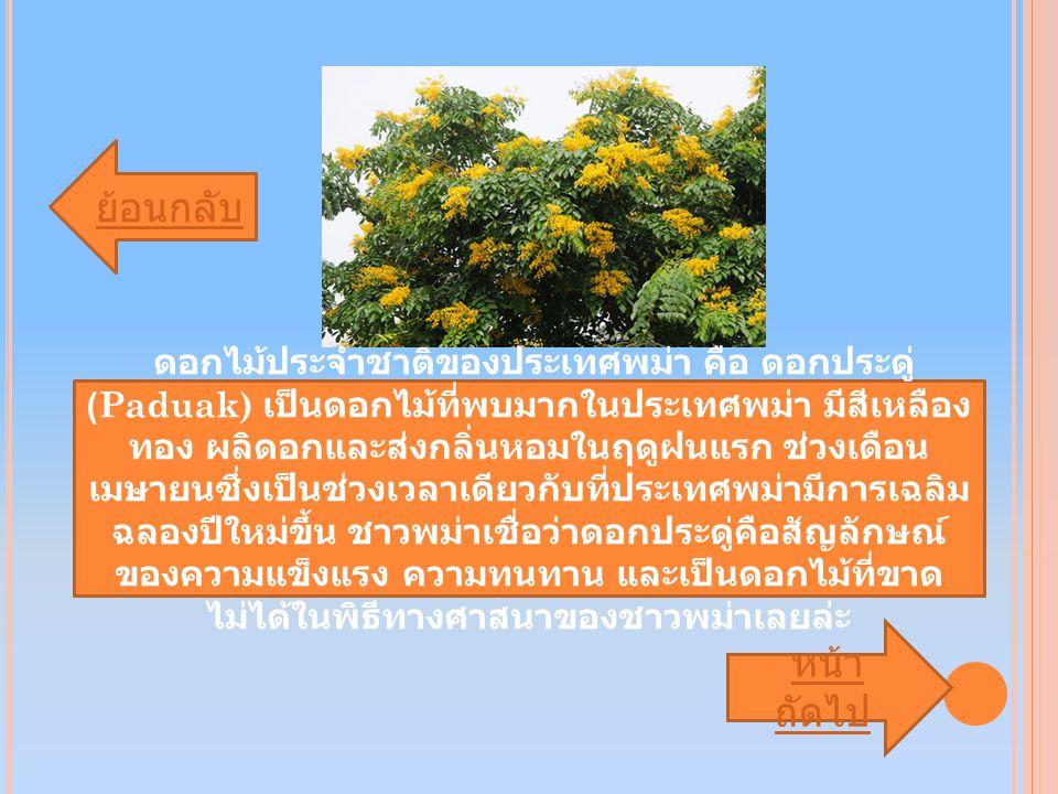 ย้อนกลับ หน้า ถัดไป หน้า ถัดไป ดอกไม้ประจำชาติของประเทศพม่า คือ ดอกประดู่ (Paduak) เป็นดอกไม้ที่พบมากในประเทศพม่า มีสีเหลือง ทอง ผลิดอกและส่งกลิ่นหอมในฤดูฝนแรก ช่วงเดือน เมษายนซึ่งเป็นช่วงเวลาเดียวกับที่ประเทศพม่ามีการเฉลิม ฉลองปีใหม่ขึ้น ชาวพม่าเชื่อว่าดอกประดู่คือสัญลักษณ์ ของความแข็งแรง ความทนทาน และเป็นดอกไม้ที่ขาด ไม่ได้ในพิธีทางศาสนาของชาวพม่าเลยล่ะ