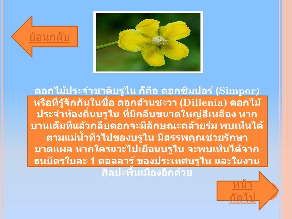 ดอกไม้ประจำชาติบรูไน ก็คือ ดอกซิมปอร์ (Simpor) หรือที่รู้จักกันในชื่อ ดอกส้านชะวา (Dillenia) ดอกไม้ ประจำท้องถิ่นบรูไน ที่มีกลีบขนาดใหญ่สีเหลือง หาก บานเต็มที่แล้วกลีบดอกจะมีลักษณะคล้ายร่ม พบเห็นได้ ตามแม่น้ำทั่วไปของบรูไน มีสรรพคุณช่วยรักษา บาดแผล หากใครแวะไปเยือนบรูไน จะพบเห็นได้จาก ธนบัตรใบละ 1 ดอลลาร์ ของประเทศบรูไน และในงาน ศิลปะพื้นเมืองอีกด้วย ย้อนกลับ หน้า ถัดไป