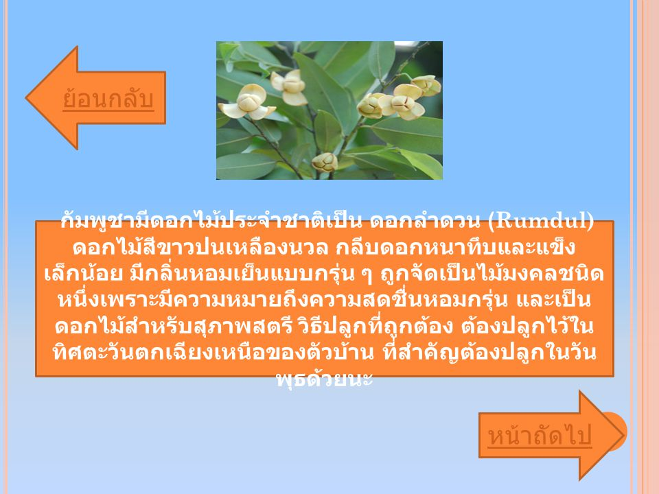 กัมพูชามีดอกไม้ประจำชาติเป็น ดอกลำดวน (Rumdul) ดอกไม้สีขาวปนเหลืองนวล กลีบดอกหนาทึบและแข็ง เล็กน้อย มีกลิ่นหอมเย็นแบบกรุ่น ๆ ถูกจัดเป็นไม้มงคลชนิด หนึ่งเพราะมีความหมายถึงความสดชื่นหอมกรุ่น และเป็น ดอกไม้สำหรับสุภาพสตรี วิธีปลูกที่ถูกต้อง ต้องปลูกไว้ใน ทิศตะวันตกเฉียงเหนือของตัวบ้าน ที่สำคัญต้องปลูกในวัน พุธด้วยนะ ย้อนกลับ หน้าถัดไป