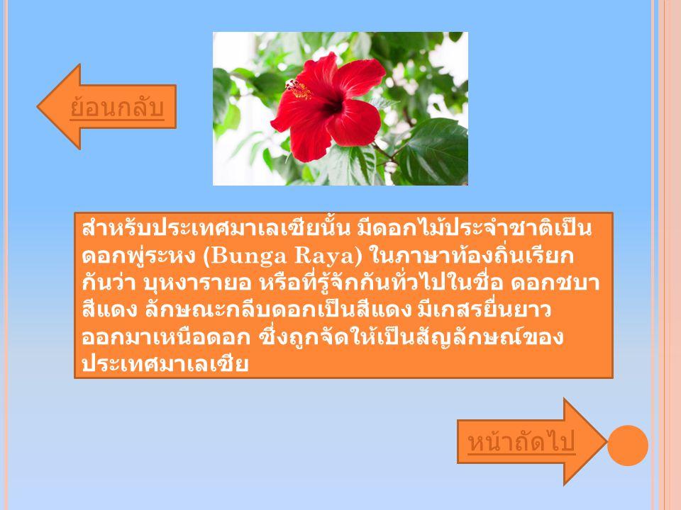 ย้อนกลับ หน้าถัดไป สำหรับประเทศมาเลเซียนั้น มีดอกไม้ประจำชาติเป็น ดอกพู่ระหง (Bunga Raya) ในภาษาท้องถิ่นเรียก กันว่า บุหงารายอ หรือที่รู้จักกันทั่วไปในชื่อ ดอกชบา สีแดง ลักษณะกลีบดอกเป็นสีแดง มีเกสรยื่นยาว ออกมาเหนือดอก ซึ่งถูกจัดให้เป็นสัญลักษณ์ของ ประเทศมาเลเซีย