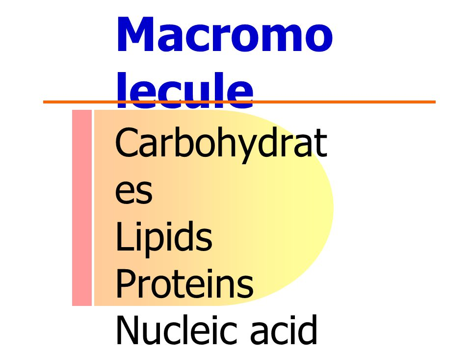 Macromo lecule Carbohydrat es Lipids Proteins Nucleic acid