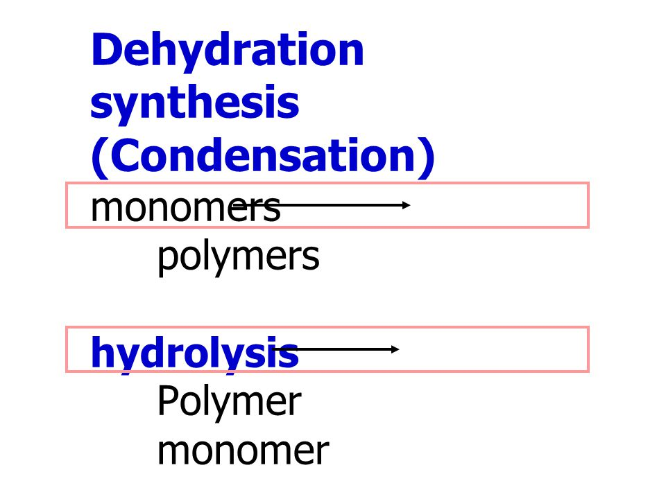 Dehydration synthesis (Condensation) monomers polymers hydrolysis Polymer monomer