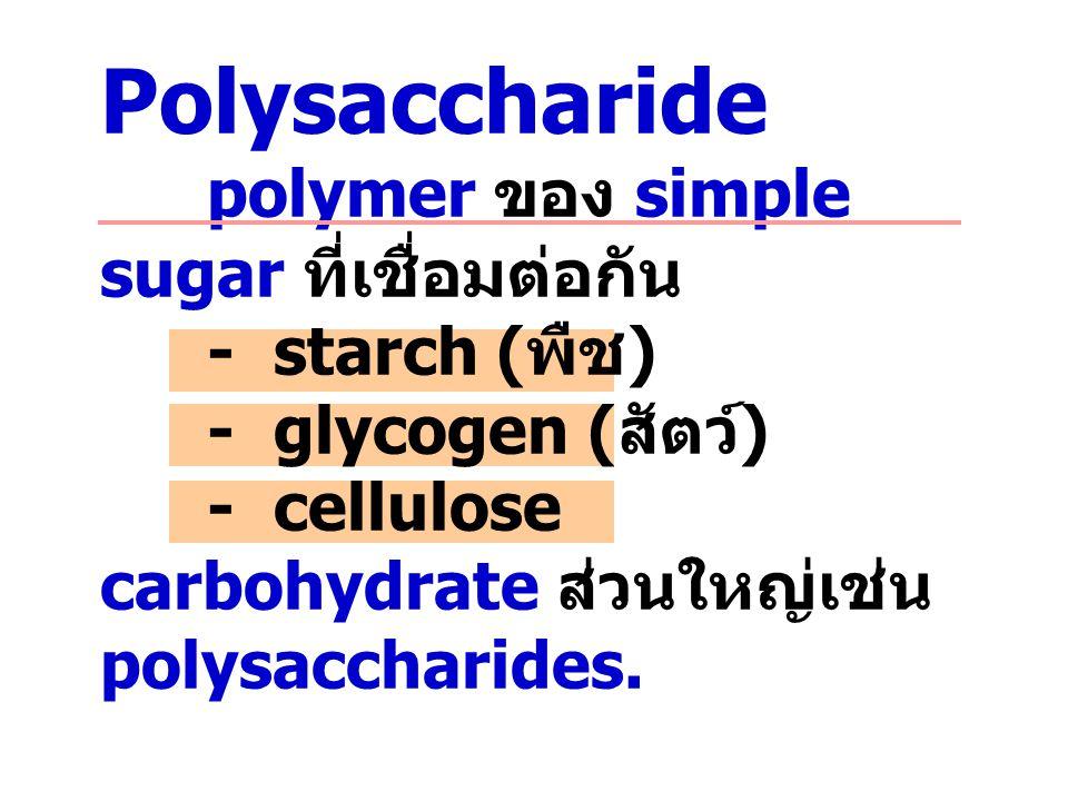 Polysaccharide polymer ของ simple sugar ที่เชื่อมต่อกัน - starch ( พืช ) - glycogen ( สัตว์ ) - cellulose carbohydrate ส่วนใหญ่เช่น polysaccharides.