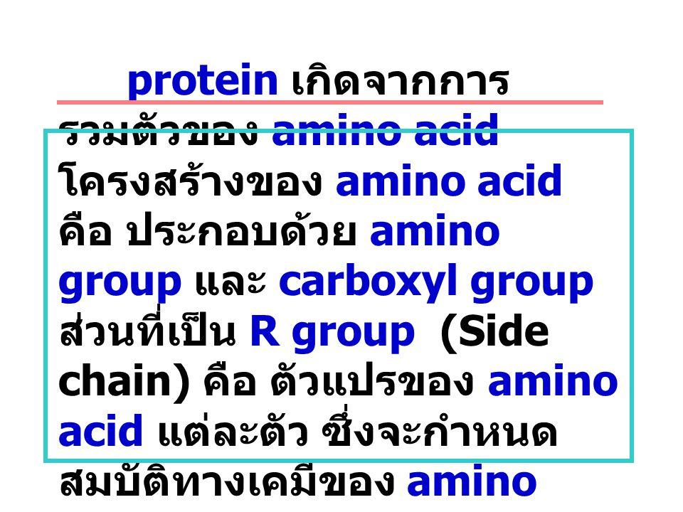Protein structure protein เกิดจากการ รวมตัวของ amino acid โครงสร้างของ amino acid คือ ประกอบด้วย amino group และ carboxyl group ส่วนที่เป็น R group (S