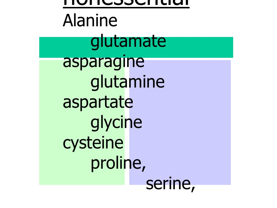 nonessential Alanine glutamate asparagine glutamine aspartate glycine cysteine proline, serine, tyrosine