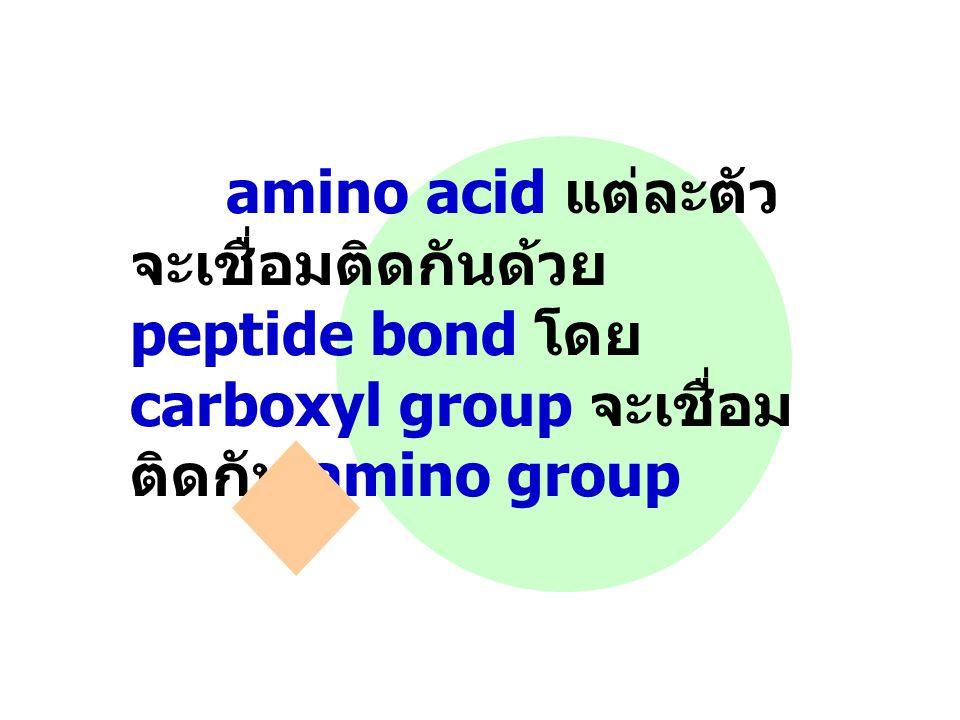 amino acid แต่ละตัว จะเชื่อมติดกันด้วย peptide bond โดย carboxyl group จะเชื่อม ติดกับ amino group