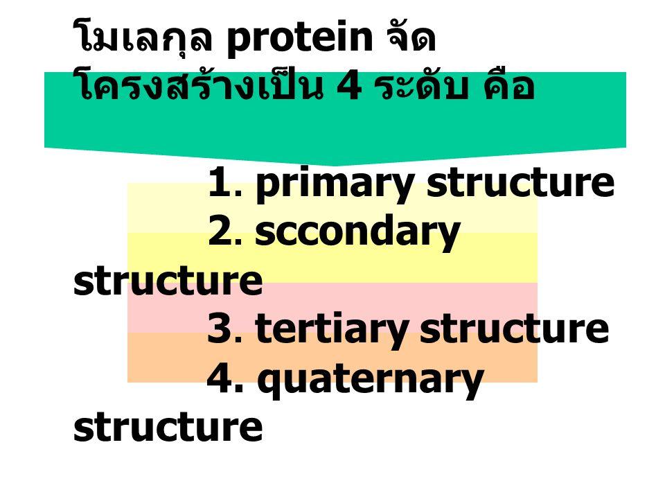 โมเลกุล protein จัด โครงสร้างเป็น 4 ระดับ คือ 1. primary structure 2. sccondary structure 3. tertiary structure 4. quaternary structure