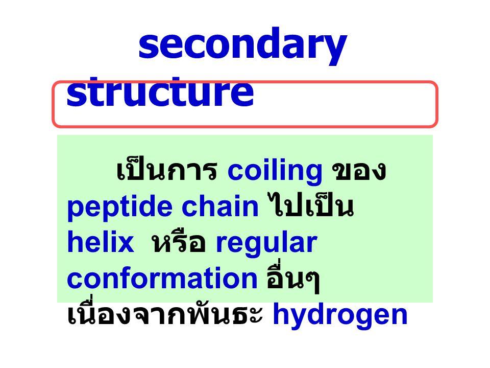 secondary structure เป็นการ coiling ของ peptide chain ไปเป็น helix หรือ regular conformation อื่นๆ เนื่องจากพันธะ hydrogen